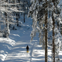Langlauf durch verschneite Landschaft